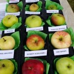 chorleywood-apples2