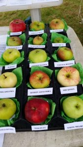 Apple Talk & Walk @ Community Building at Coombe St end of Water Gardens