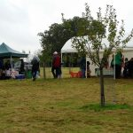 chorleywood-apples3